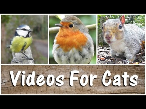 Videos For Cats to Watch Birds & Squirrels - The Ultimate Video for Your Cat