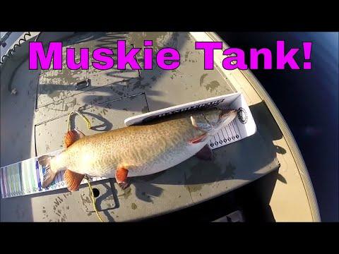 Muskie Fishing Saint John River Canada November 2017