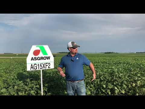 AG15XF2 - the mid maturity soybean for highly productive soils!