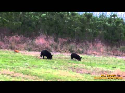 Hunting Wild Hogs  -  East Texas