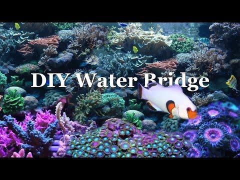 HOW TO: aquarium water bridge