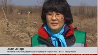 Вырастить лес. Новости. 03/05/2017. GuberniaTV