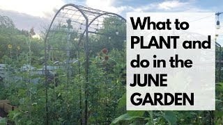 Arizona Garden in June - Which VEGETABLES & FLOWERS to PLANT & how to SURVIVE THE HEAT!