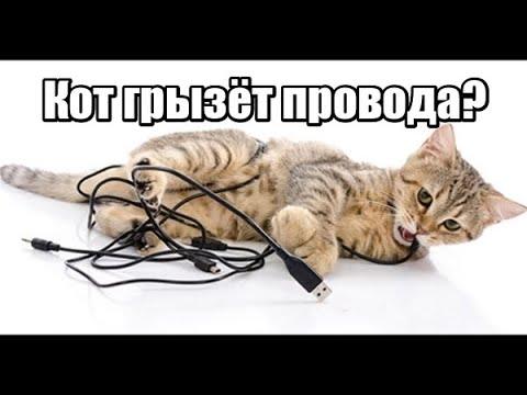 лайфхак как защитить провода от кота Просто и гуманно