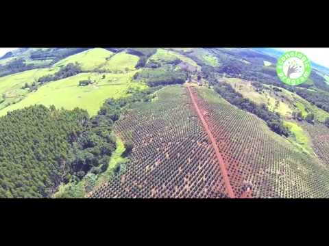 Brazil Forest (Groupe SLB) - São Francisco Farm [ENG]