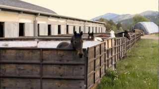 Autumn Hill | Equestrian Farm