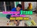 Cara Membuat Vitamin Racikan Sendiri Khusus Menggacorkan Lovebird Jantan  Mp3 - Mp4 Download