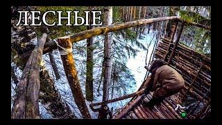 ДОМ НА ДЕРЕВЕ СВОИМИ РУКАМИ | ОХОТНИЧЬЯ БАШНЯ | HUNTING TOWER DIY | BUSHCRAFT HOUSE ON THE TREE