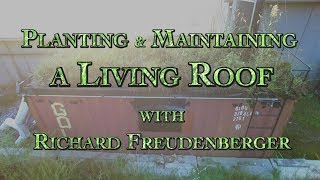 Planting & Maintaining a Living Roof