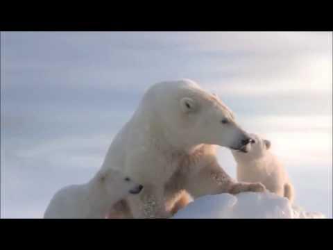 HELIOS FILM e WWF insieme contro il cambiamento climatico.