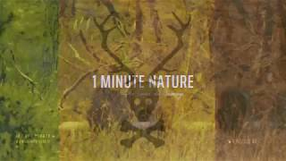 Le Cerf Pirate -  1 MINUTE NATURE   - EP 01