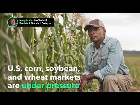 2019 Grain Market