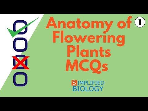 ANATOMY OF FLOWERING PLANTS MCQs 1 for NEET, AIIMS, AIPMT, JIPMER, PREMED