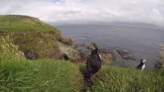 Gambar cover The Isle of Mull & Staffa