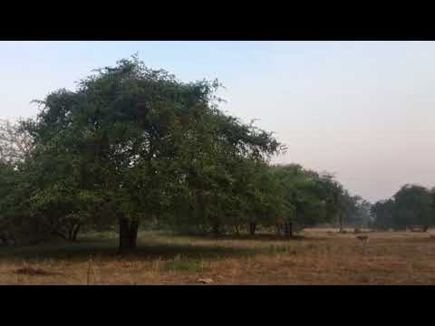 Spotted Deer - Alarm Call