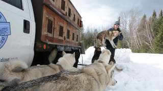 Vermont dog sled team goes solar to protect winter