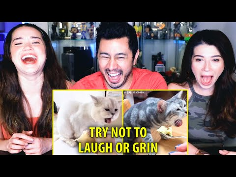 TRY NOT TO LAUGH OR GRIN WHILE WATCHING FUNNY ANIMALS #23 | Reaction | Jaby Koay, Alina & Achara