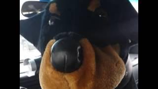 Mayhem News Live Rocky Rottweiler's View On #riley