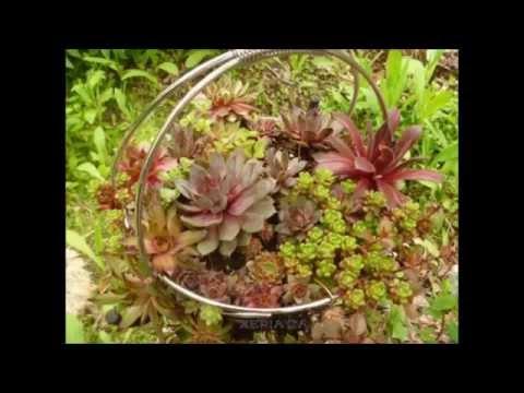 Succulent Crafts E-Course - Find Out How To Make Unique Succulent Crafts