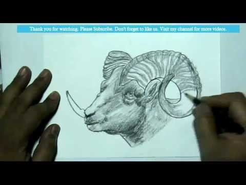 How To Draw A Ramgoat