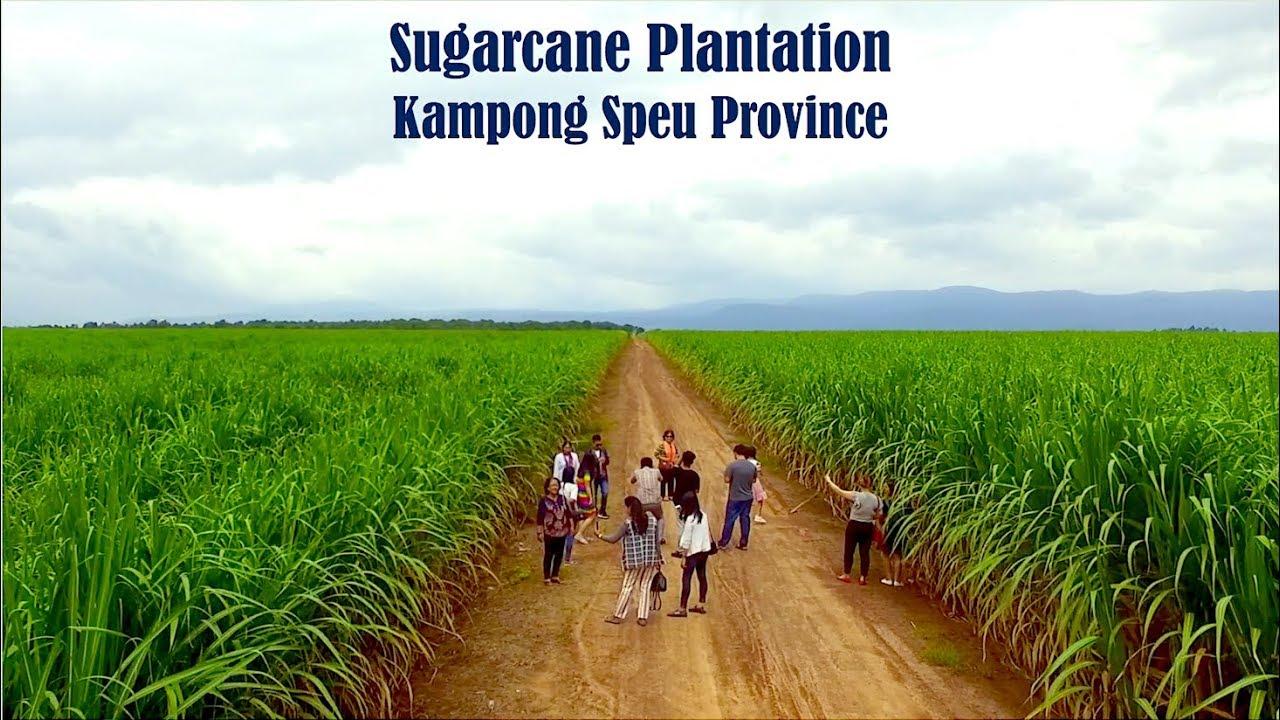 Adult Guide Kampong Spoe