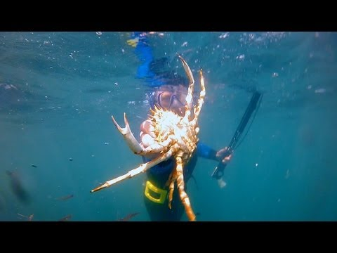 Spearfishing at Portland, south coast, Dorset, England