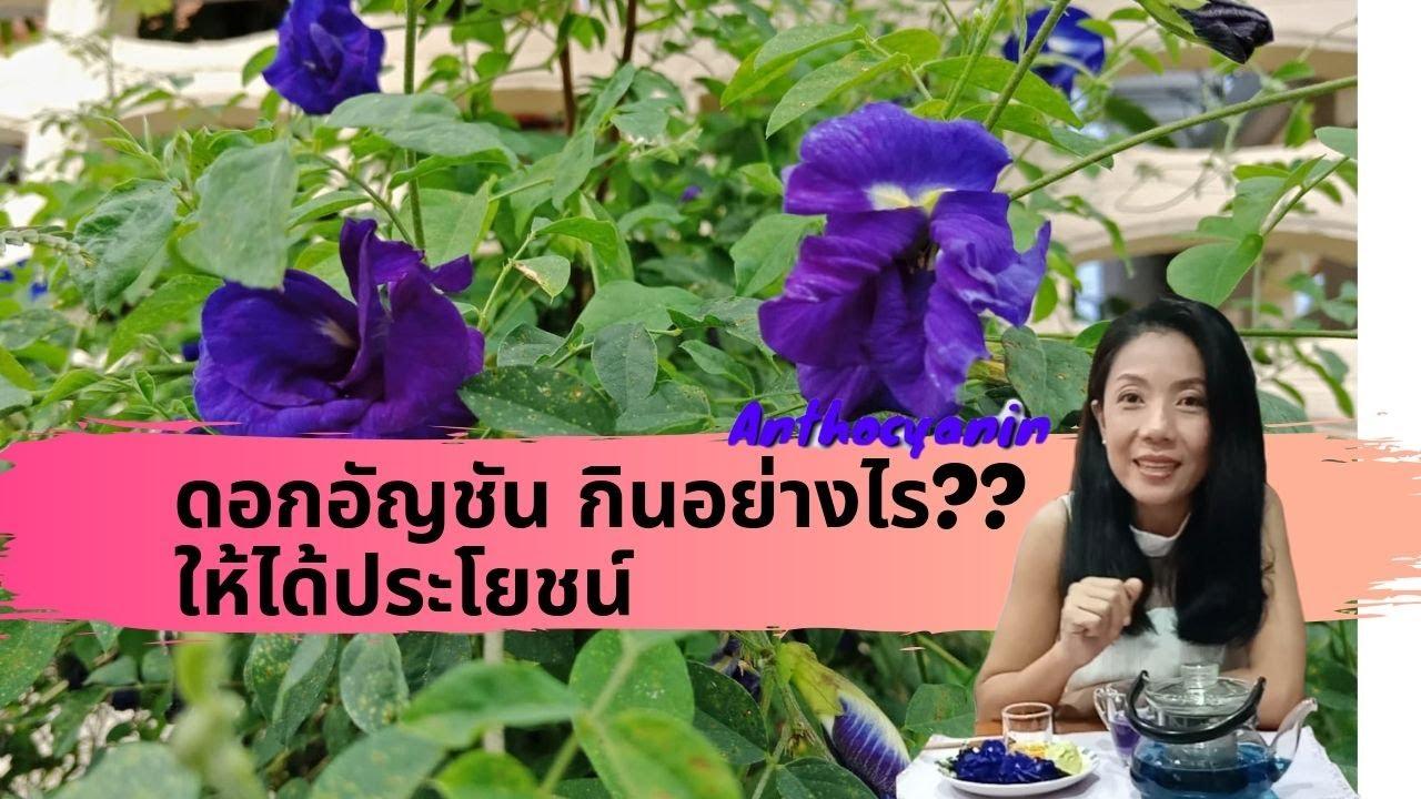 ดอกอัญชัน ประโยชน์และโทษ ที่ควรรู้ , Butterfly Pea flower