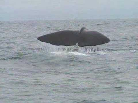 The Dubliners - The Last Of The Great Whales