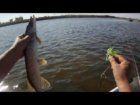 Ловля щуки мелководья на спиннербейт Megabass V-Flat.Pike Fishing.