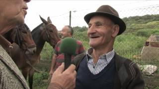 Semos Canarios - Feria de ganado de Los Realejos - T09x07