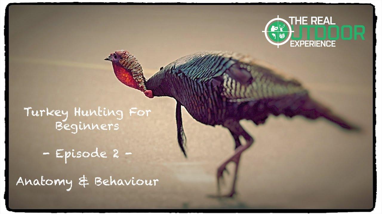 Turkey Anatomy & Behaviour- Episode 2 - Turkey Hunting for Beginners ...