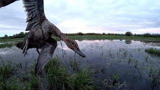 Охота на утку. Охота с подхода и на вечере.