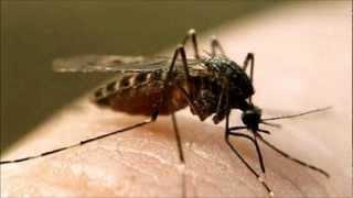 видео Москитная сетка на магнитах на дверь – спасаемся от комаров и мух