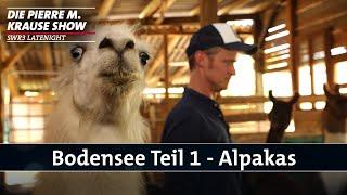 Bodensee 1 – Alpakas