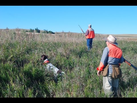Montana Upland Bird Hunting 2015