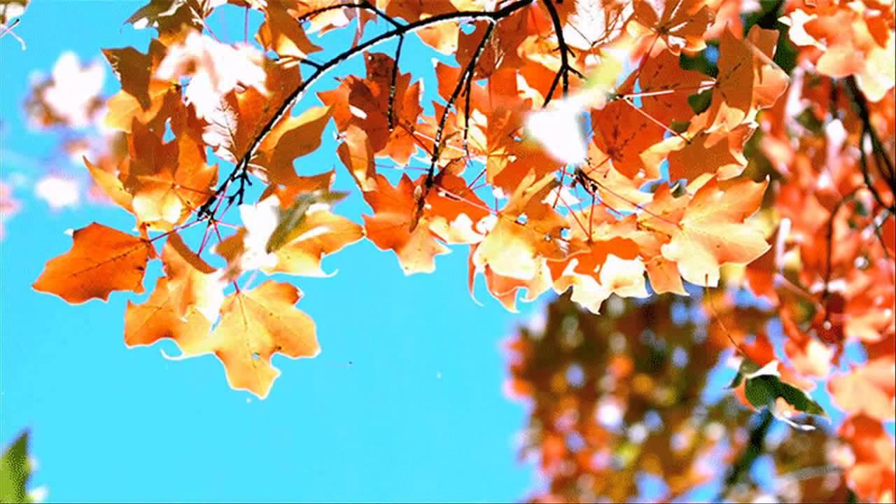 Королев, картинки осенние листья с анимацией