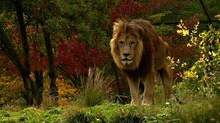 Zoo de Vincennes : le parc tout confort pour un hiver au chaud