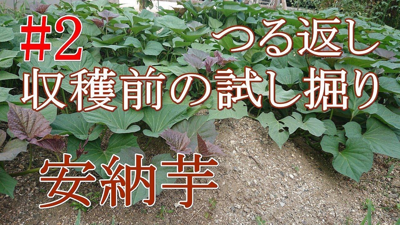 さつま芋 の 植え 方