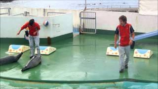 ゴマフアザラシの シズカちゃん 小樽水族館 thumbnail