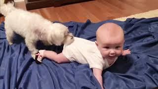 Kelakuan anak bayi vs hewan peliharaan lucu, bikin ngakak 😂