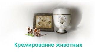 Кремация животных. Ветеринарная клиника Био-Вет.