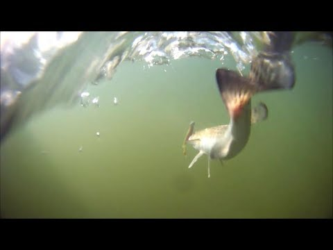 Magnolia River Magic - Winter Time Speckled Trout And Redfish