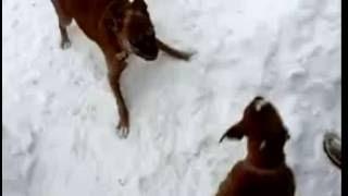 старый пес троллит  щенка .