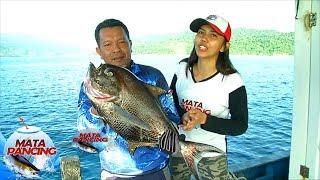 Matahari Pagi Yang Cerah, Disambut Dengan Liarnya Ikan Bongsang - Mata Pancing (14/4)