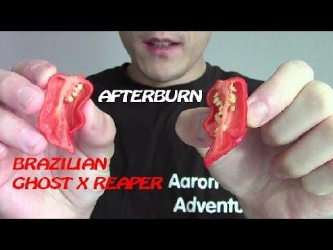 Brazilian Ghost Pepper X Carolina Reaper Hybrid   Afterburn