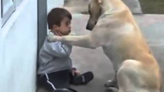 You Are so Beautiful, (Dog trying to find a friend) Best Friend