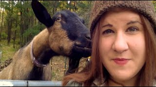 Episode 63: Goats vs Sheep!