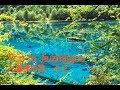 Trip to Jiuzhaigou九寨溝の旅#2熊貓海Panda Lake の動画、YouTube動画。