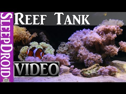 ►10 hours of Saltwater Reef Aquarium. HD Fish Tank. Aquarium Video For Cats. Aquarium HD Vdeo.