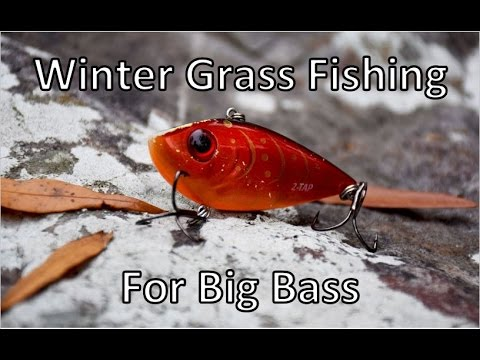 Winter Grass Fishing With Lipless Crankbaits